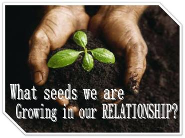 What seeds you are growing